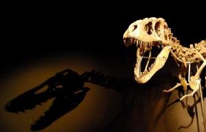 17809-dinosaur-skeleton-pv
